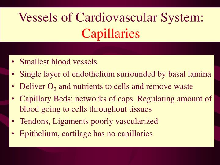 Vessels of Cardiovascular System: