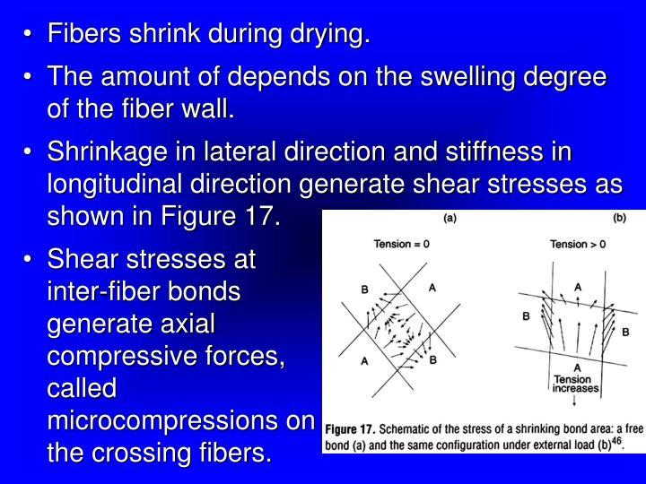 Fibers shrink during drying.