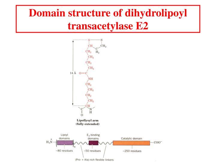Domain structure of dihydrolipoyl transacetylase E2
