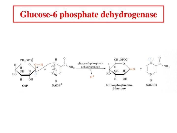 Glucose-6 phosphate dehydrogenase