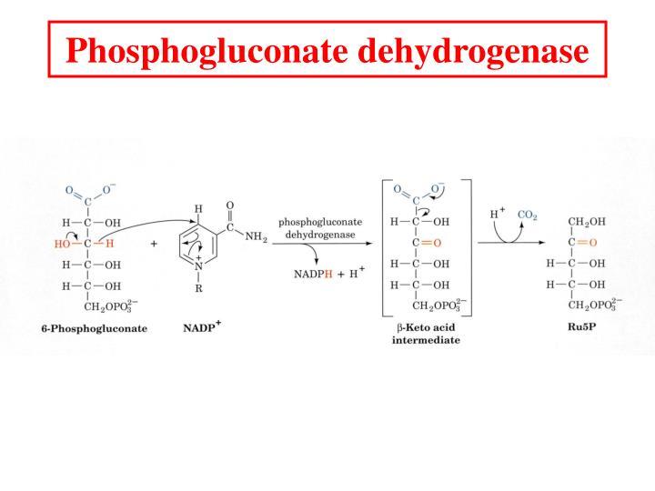 Phosphogluconate dehydrogenase