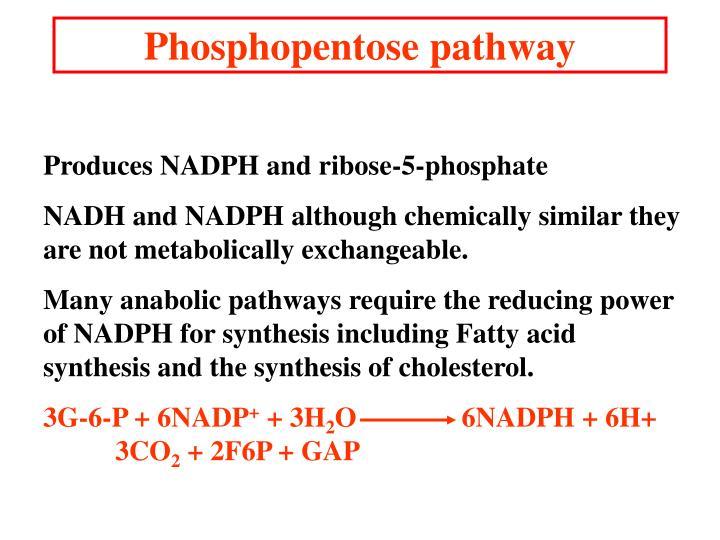 Phosphopentose pathway