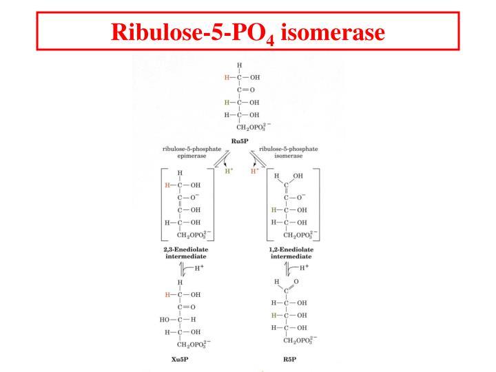 Ribulose-5-PO
