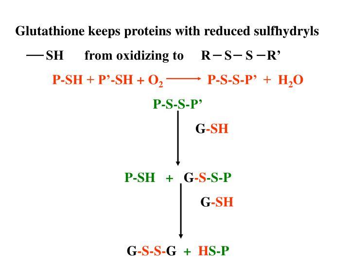 Glutathione keeps proteins with reduced sulfhydryls