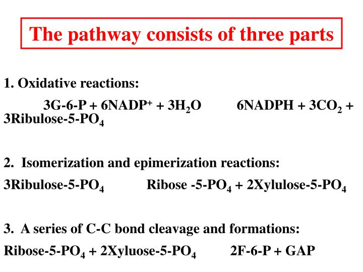 The pathway consists of three parts