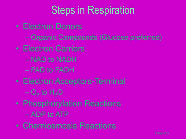 Steps in Respiration
