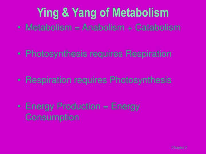Ying yang of metabolism