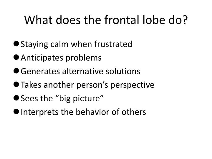 What does the frontal lobe do?