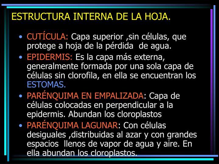 ESTRUCTURA INTERNA DE LA HOJA.