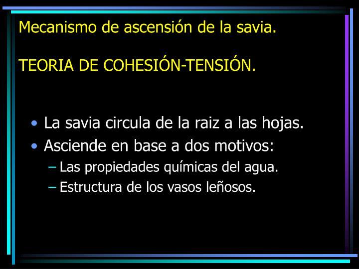 Mecanismo de ascensión de la savia.
