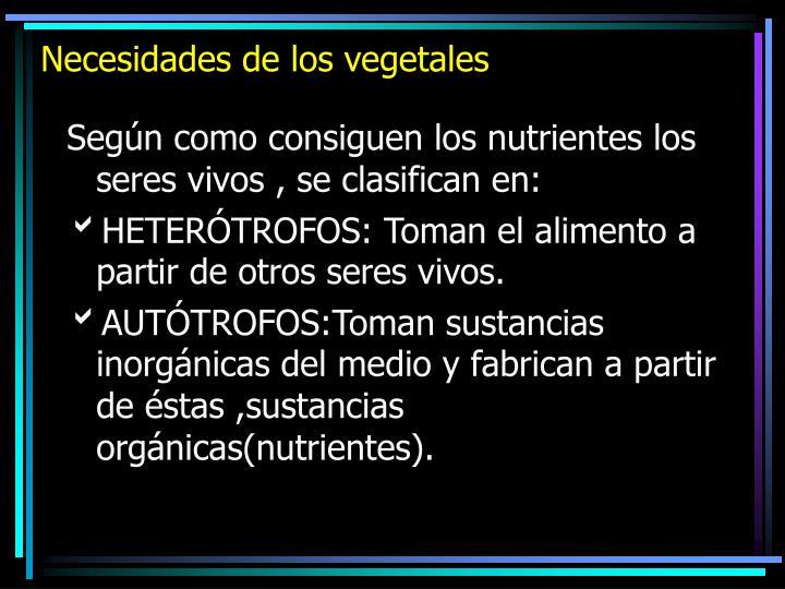 Necesidades de los vegetales