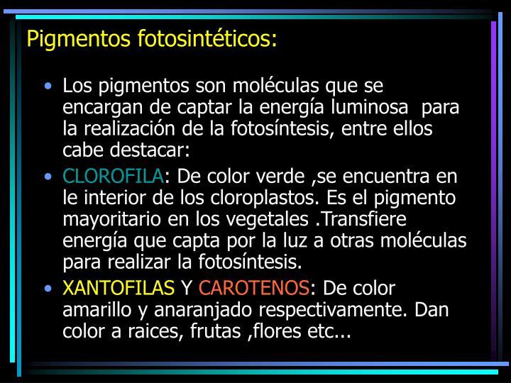 Pigmentos fotosintéticos: