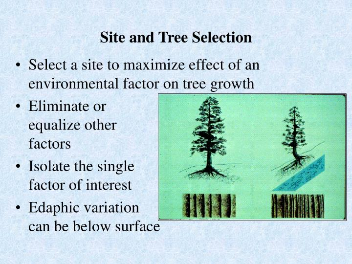 Site and Tree Selection