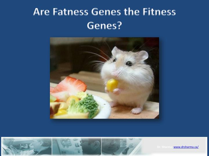 Are fatness genes the fitness genes