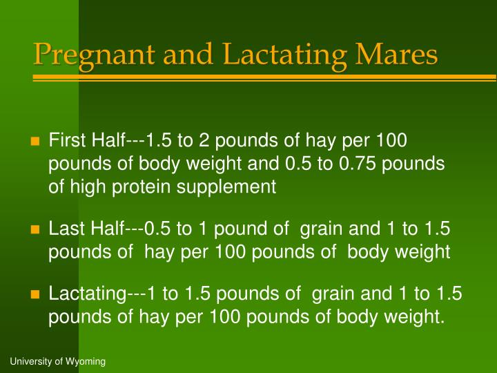Pregnant and Lactating Mares