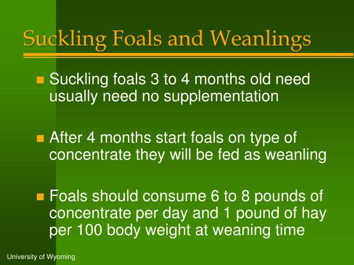 Suckling Foals and Weanlings