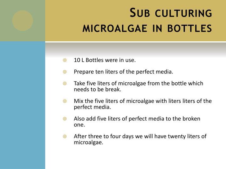 Sub culturing microalgae in bottles