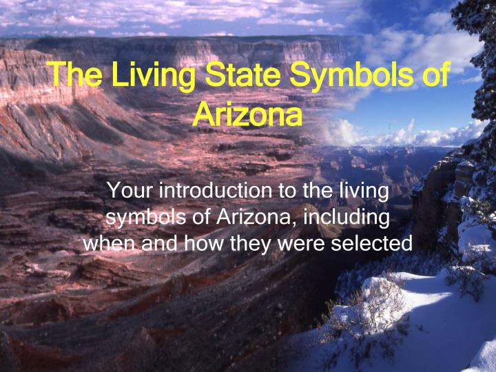 Ppt The Living State Symbols Of Arizona Powerpoint Presentation