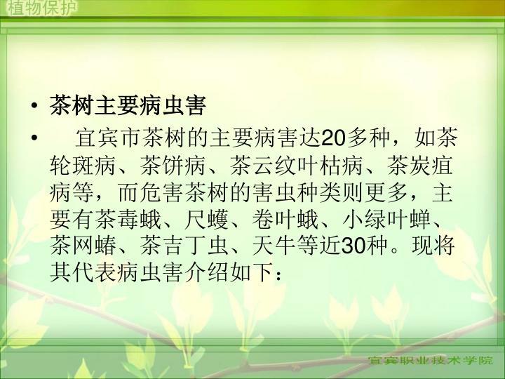 茶树主要病虫害