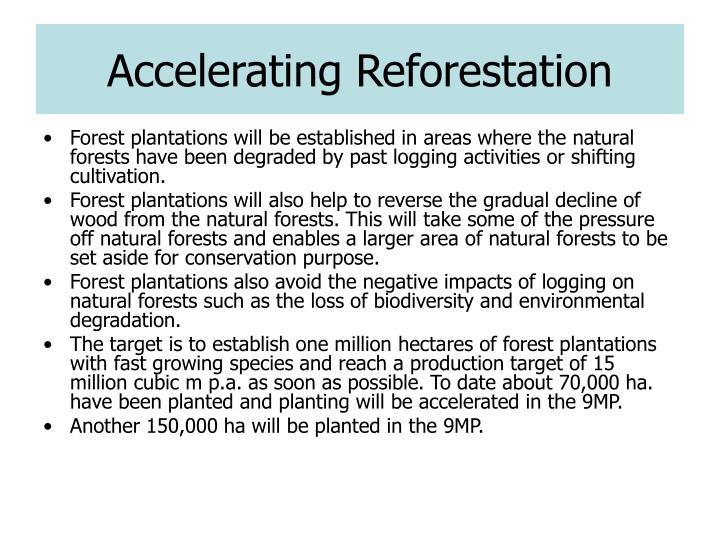Accelerating Reforestation
