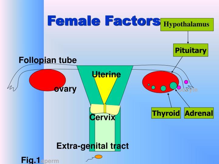 Female Factors