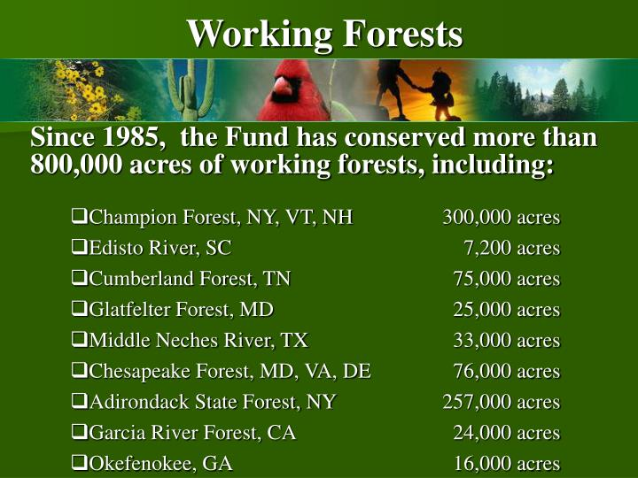 Working Forests