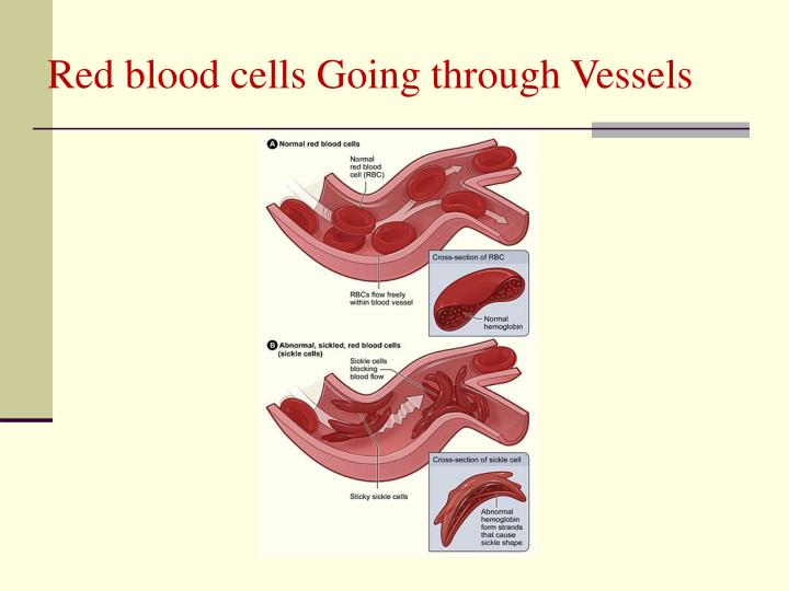 Red blood cells Going through Vessels