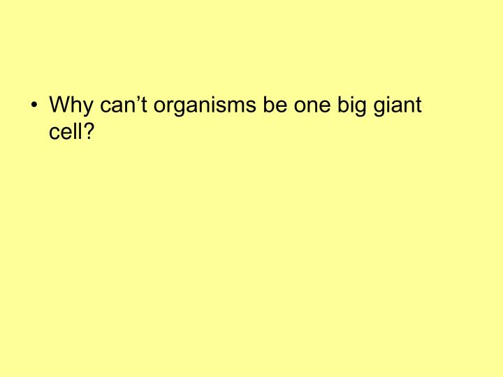 Why can't organisms be one big giant cell?
