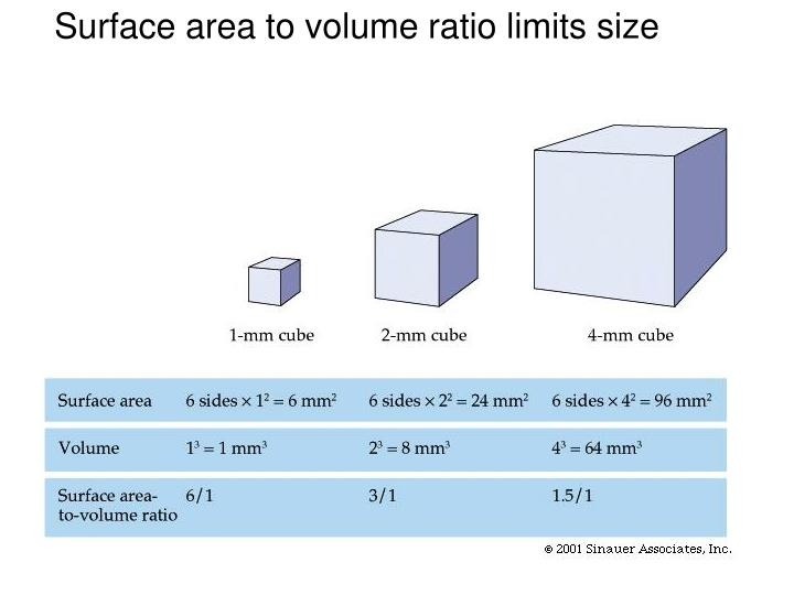 Surface area to volume ratio limits size