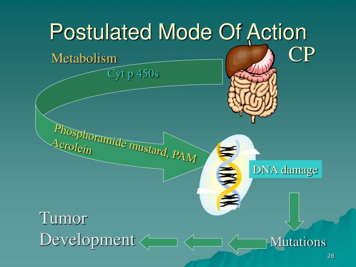 Postulated Mode Of Action