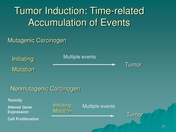 Tumor Induction: Time-related Accumulation of Events