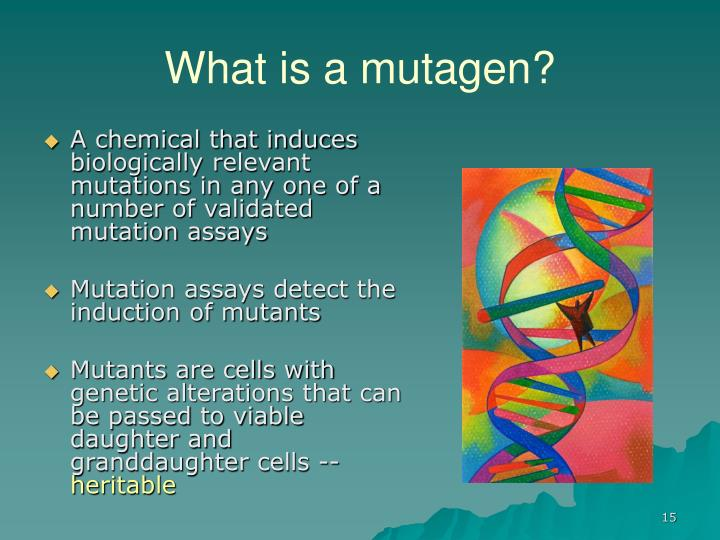 What is a mutagen?