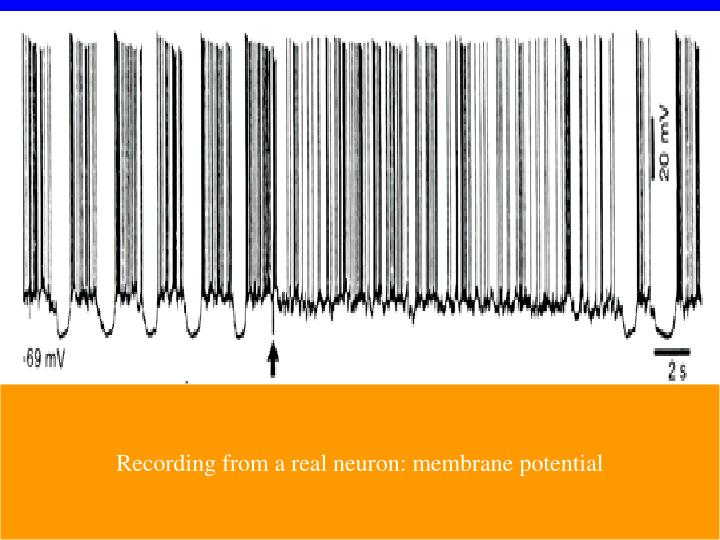 Recording from a real neuron: membrane potential