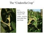 the cinderella crop1