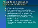 mioepitelio neopl sico espectro morfol gico1
