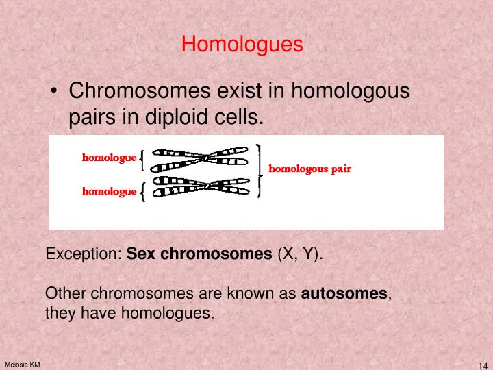 Homologues