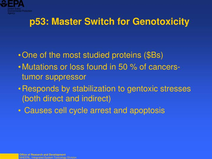 p53: Master Switch for Genotoxicity
