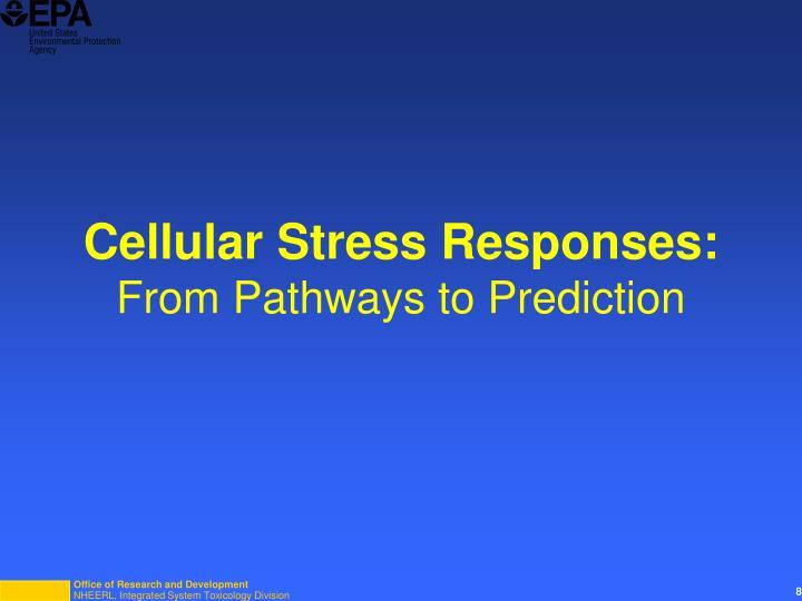 Cellular Stress Responses: