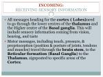 incoming receiving sensory information