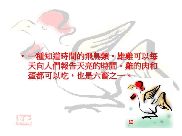 一種知道時間的飛鳥類。雄雞可以每天向人們報告天亮的時間。雞的肉和蛋都可以吃,也是