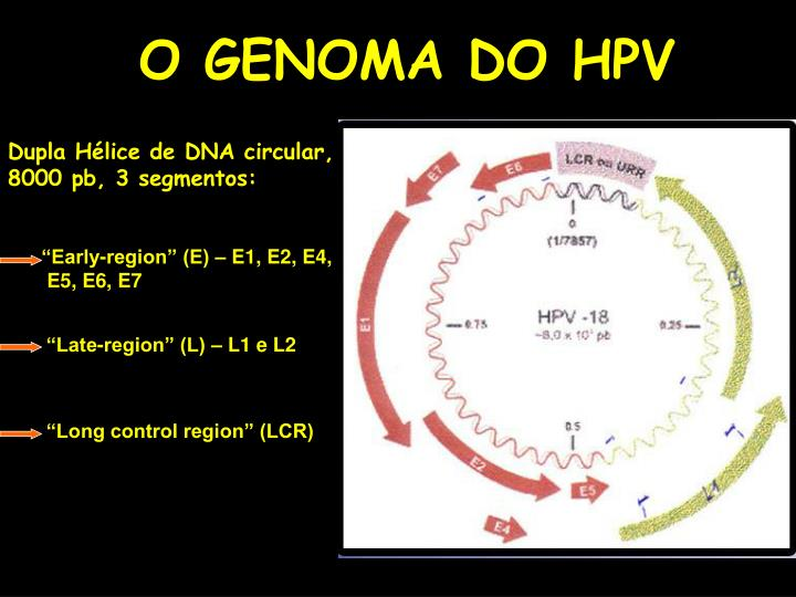O GENOMA DO HPV