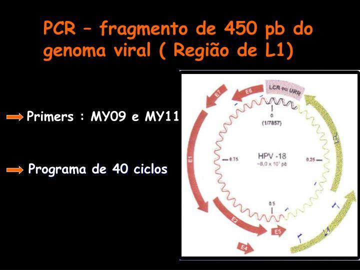PCR – fragmento de 450 pb do genoma viral ( Região de L1)