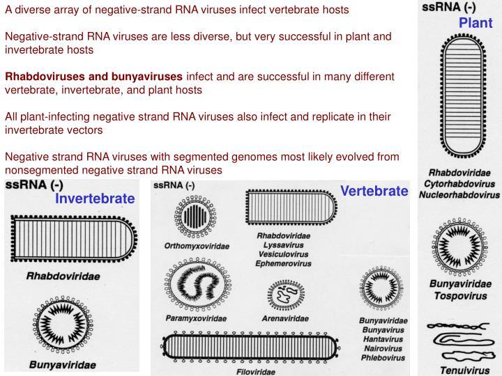 A diverse array of negative-strand RNA viruses infect vertebrate hosts