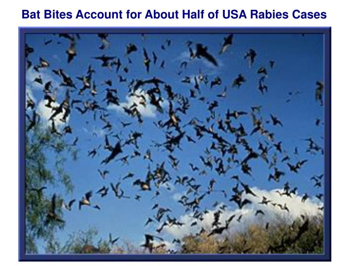 Bat Bites Account for About Half of USA Rabies Cases