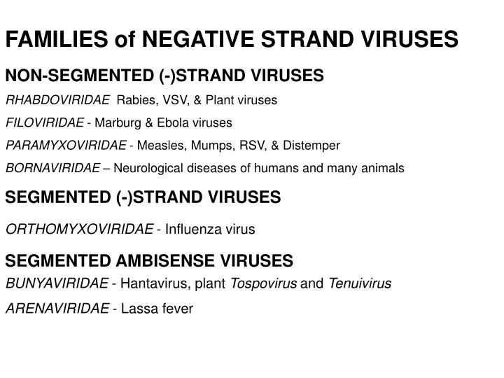 FAMILIES of NEGATIVE STRAND VIRUSES