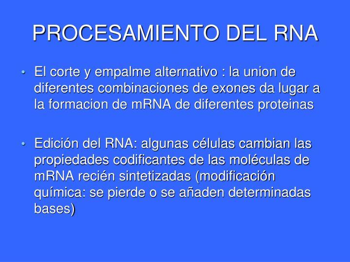 PROCESAMIENTO DEL RNA