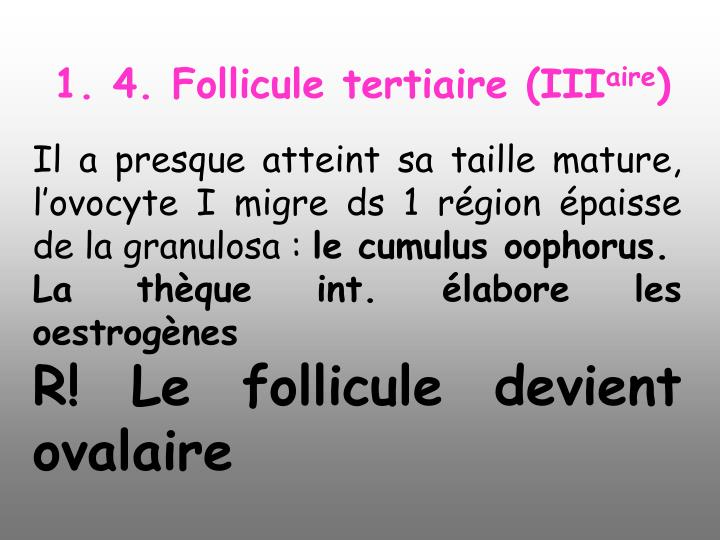1. 4. Follicule tertiaire (III