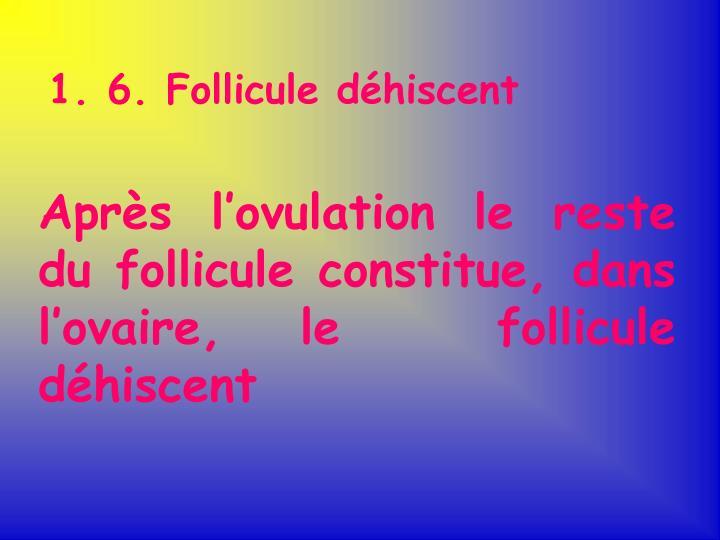 1. 6. Follicule déhiscent