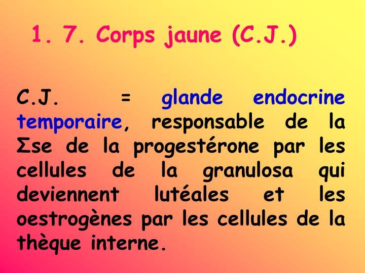 1. 7. Corps jaune (C.J.)