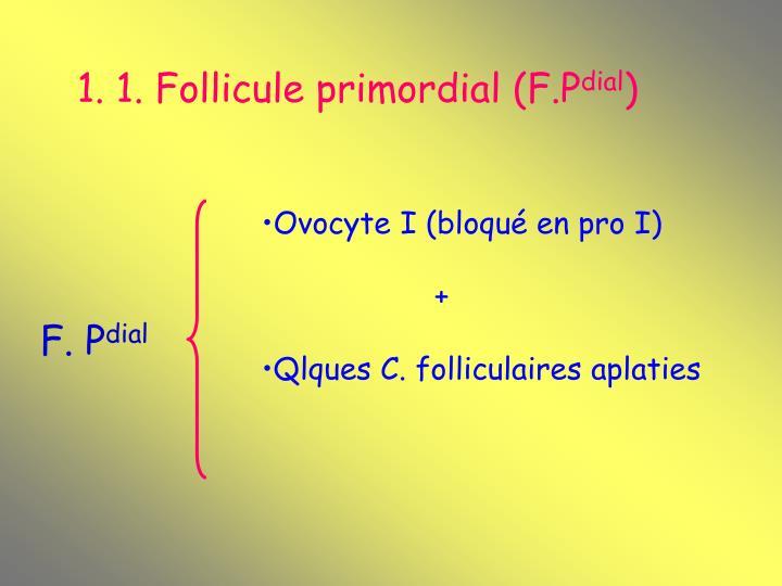 1. 1. Follicule primordial (F.P